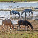 Hevosia rantaniityllä, Hiidenmaa