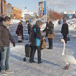 Kaupunkilaiset ihailevat lintua, Tallinna